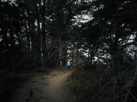 USA, California, Big Sur, little boy in the woods, Julia Pfeiffer Burns State Park - SBDF002272