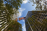 USA, New York City, skyscrapers, trees and American Flag at Downtown Manhattan - GIOF000119