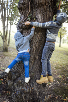 Back view of two little boys climbing on a tree trunk - MGOF000779