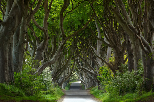 Northern Ireland, near Ballymoney, alley and trees, known as Dark Hedges - KLRF000146