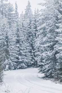Bulgaria, Vitosha Mountain, winter road - BZF000257