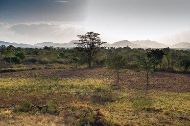 Sri Lanka, Yala National Park - NNF000237