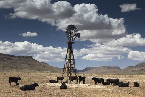 USA, Texas, cattle at water windmill - NNF000258