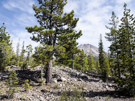 USA, California, Lassen Volcanic National Park, Lassen Peak and pine trees - SBDF002264