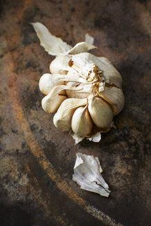 Garlic bulb - KSWF001588