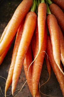 Bunch of carrots - KSWF001609