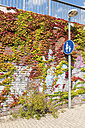 Overgrown brick wall at pedestrian walkway - VIF000415