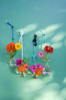 Laboratory glassware with common zinnia fixed with cords hanging on a wall - GISF000176