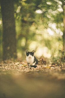 Black and white cat sitting in the woods - JPF000061