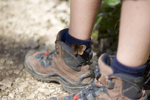 Butterfly Meadow Brown on boy's hiking shoe - JEDF000253