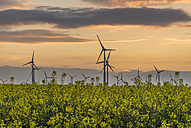 Wind farm and rape field at sunset - PVCF000711