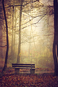 Bench in the autumn morning - DWI000619
