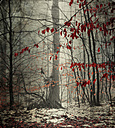 Winter forest with last leaves - DWIF000622