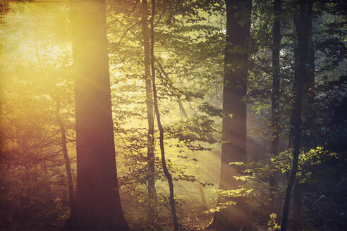 Deciduous forest and morning sun in autumn - DWIF000625