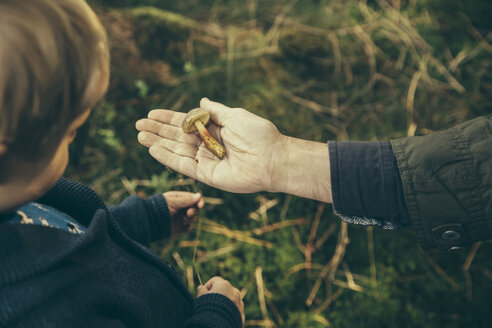 Mature man showing boletus submentosus to boy - MFF002410