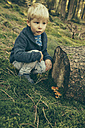Little boy crouching in forest, looking at honey fungi - MFF002422