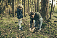 Mature man collecting bay bolete mushrooms with little boy - MFF002431