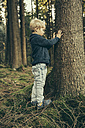 Little boy in forest touching bark of spruce tree - MFF002434