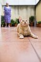 Ginger kitten playing on terrace, senior woman watching - RAEF000563