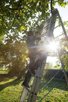 Back view of boy on a ladder in the garden - SARF002232