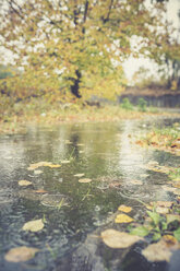 Rain falling in a puddle at autumn - ASCF000400