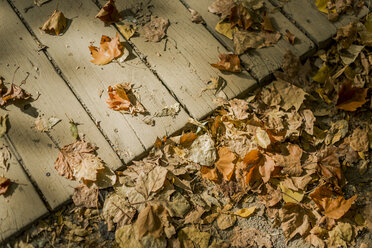 Autumn leaves on soil and wooden boardwalk - JPF000064