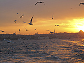 Turkey, Istanbul, Seagulls flying at sunset over Bosphorus - JMF000358