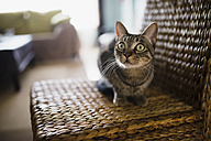 Portrait of starring cat sitting on wicker chair - RAEF000583