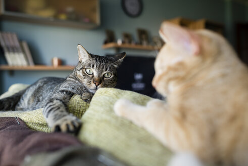 Two cats resting on the top of a couch - RAEF000589