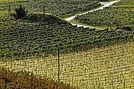 Austria, Burgenland, Eisenberg an der Pinka, vineyards - LBF001265