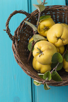 Wickerbasket of quinces - MYF001189