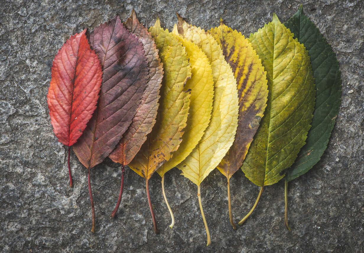 Different autumn leaves - DEGF000556 - Deyan Georgiev/Westend61