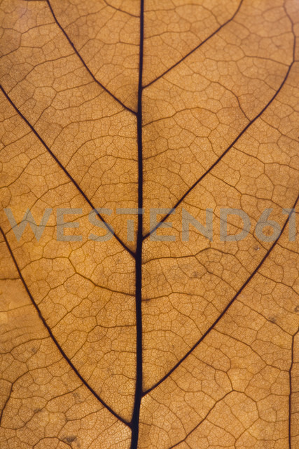 Brown leaf, close up - ERLF000075 - Enrique Ramos/Westend61