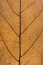 Brown leaf, close up - ERLF000075