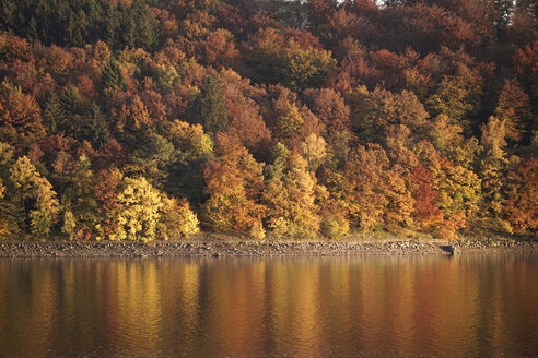 Germany, Langscheid, view to autumnal trees at lakeshore of Sorpe Dam - PCF000208