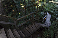 Canada, Vancouver Island, Wooden stairs in redwood forest - TMF000046