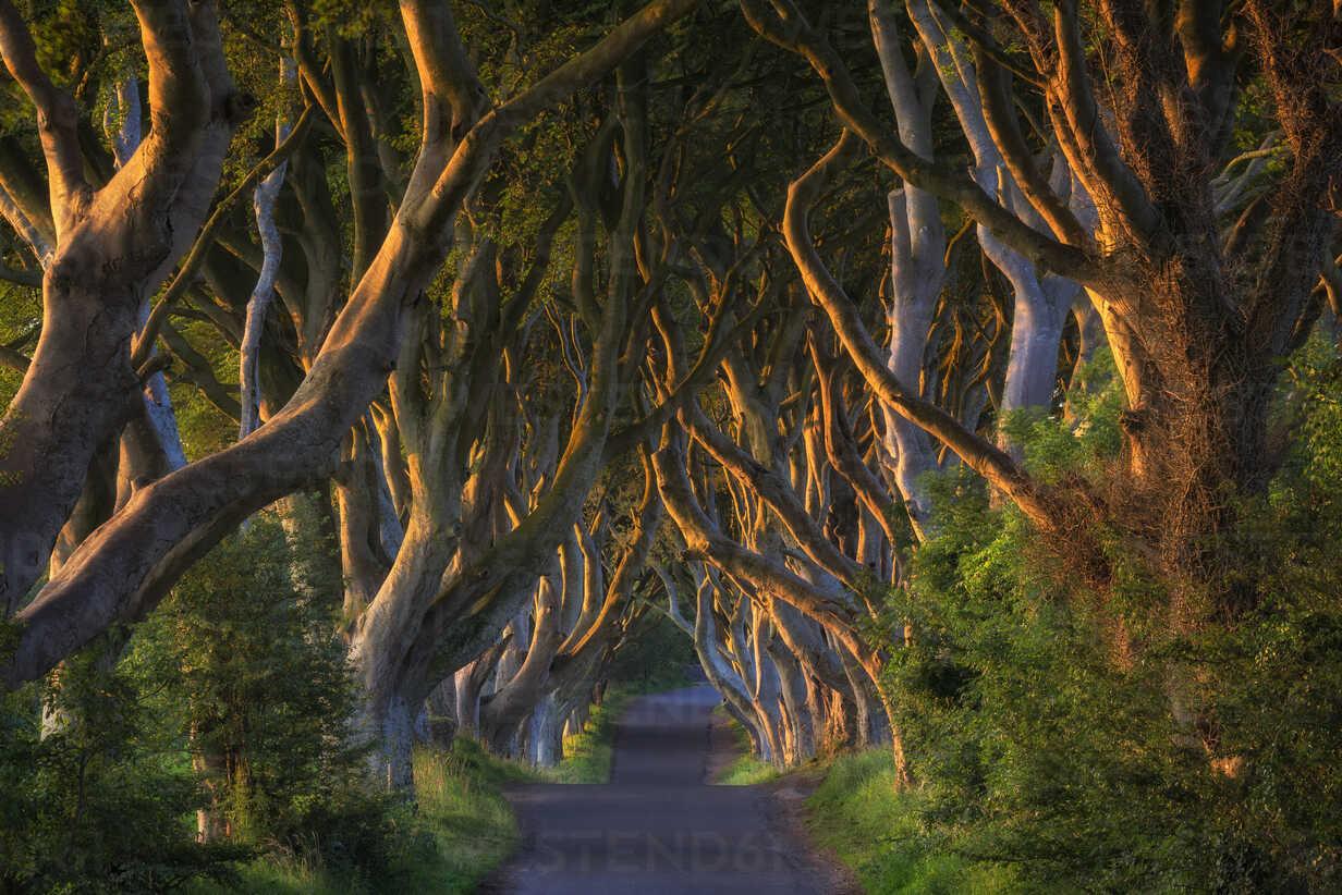 Northern Ireland, near Ballymoney, alley and beeches, known as Dark Hedges - ELF001705 - Markus Keller/Westend61