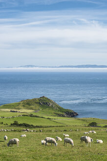 Northern Ireland, County Antrim, View from Torr Head to scotish coast - ELF001708