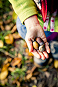 Little girl's hand holding acorns, close-up - LVF004113