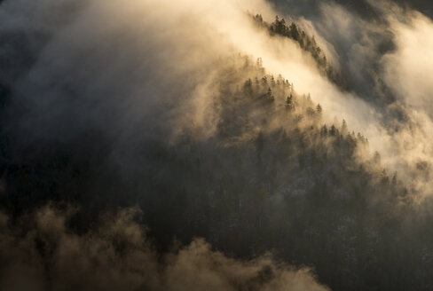 Austria, Tyrol, Kufstein, Trees and fog - MKFF000260