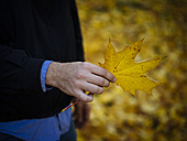 Hand of man holding autumnal maple leaf - DASF000024