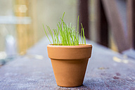 Flowerpot with growing young grass - KNTF000155