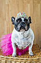 Portrait of French Bulldog dressed up as princess - KIJF000019