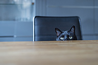 Black cat sitting on a chair hiding behind tabletop - FRF000357