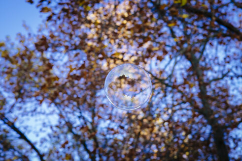 Soap bubble on tree, reflection of Great St Martin in Cologne - DASF000030