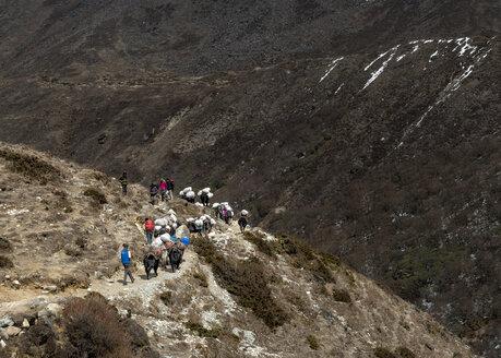 Nepal, Himalaya, Khumbu, trekkers and pack animals on hiking trail - ALR000136