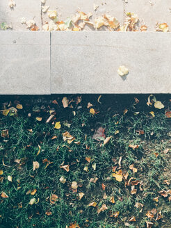 Fallen Autumnal Leaves On The Ground - BZF000272