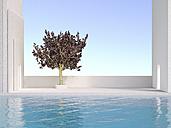 3D Rendering, Japanese cherry, outdoor area, swimming pool - UWF000675