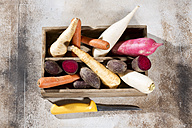 Carrot, beetroot, white and red radish, parsley root and parsnip in wooden box - MAEF011035