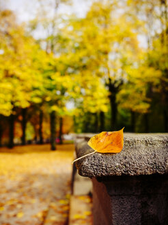 Lonely autum leaf on stone - KRPF001628